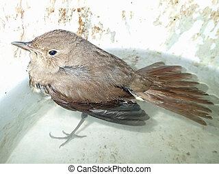 woda ptaszek