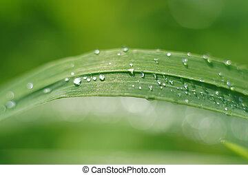 woda, trawa, liść, krople