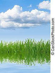 woda, trawa, niebo
