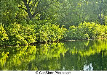 woda, zielony, odbicia
