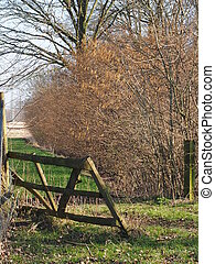 wodden fence in Spring