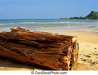 Woden log on the beach
