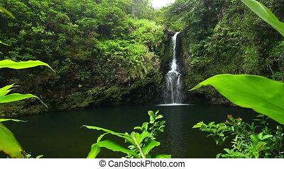 wodospad, dżungla, hawaje