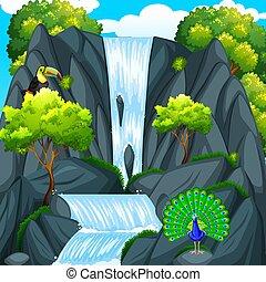 wodospad, tukan, ptak