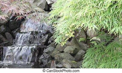 wodospad, z, klon, drzewa, ogród