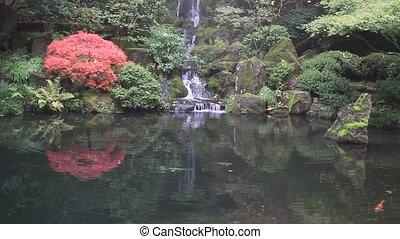 wodospad, z, koi ryba, w, ogród