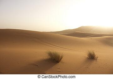 woestijn, dreamscape