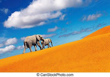 woestijn, fantasie, olifanten, wandelende