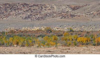 woestijn, zuidwesten