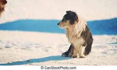 wohnungslose, hund, winter, coldly., wohnungslose, tiere,...