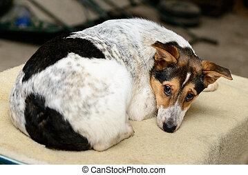 wohnungslose, junger hund, in, unterstand
