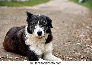 wohnungslose, straße, verlassen, verirrter hund