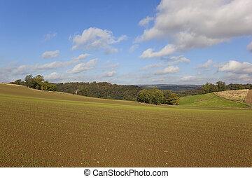 wolds, paisaje, yorkshire