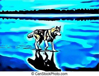 wolf, alone