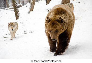 Wolf and bear.