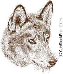 wolf, antikes , stich, abbildung, kopf