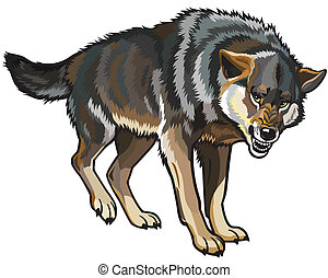 wolf, canis lupus, standing pose, picture isolated on white background
