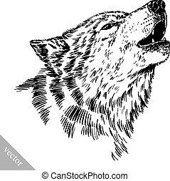 wolf, gravieren, freigestellt, schwarz, weißes