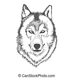 Wolf, hand drawn, sketch, vector illustration