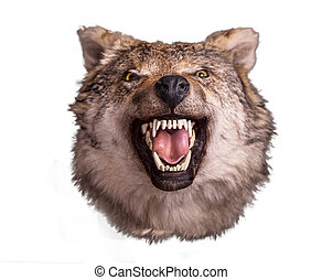Wolf head with angry face on white background