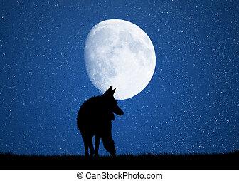 wolf, in, der, mondschein
