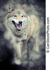 Wolf in smoke