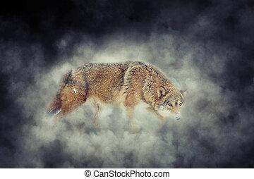 Wolf in smoke