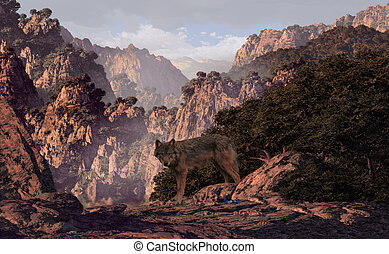 Wolf In The Canyon