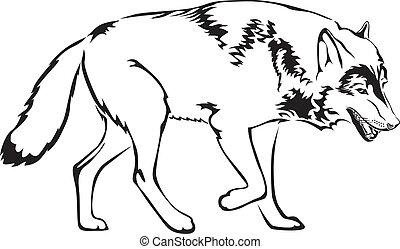 wolf, kontur