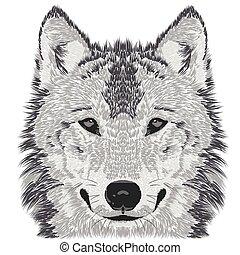 Wolf muzzle sketch
