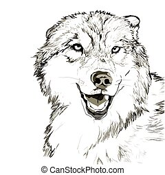 Wolf muzzle sketch - Vector portrait of angry wolf face