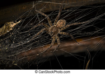 large wolf spider sitting on web