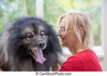 Wolf Spitz Dog with groomer woman in the bacground.