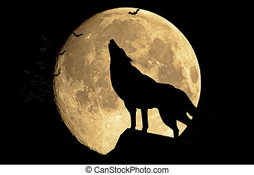 Wolf - The wolf howling at the full moon