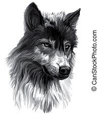 Wolf,illustration