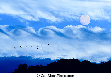 wolken, fantasie, maan, vogel
