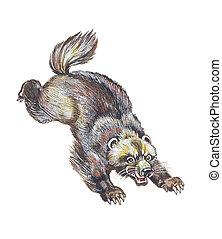 Wolverine (Gulo gulo), glutton, carcajou, skunk bear,...