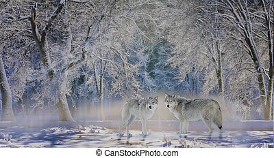 Wolves of Yellowstone - Two wolves stand in a snow-covered...