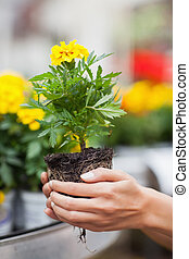 Woman about to put plant into pot in garden center