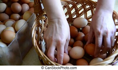 Woman adds eggs in wicker basket, close - Woman adds eggs in...