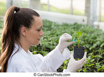 Woman agronomist doing experiment on seedling in greenhouse