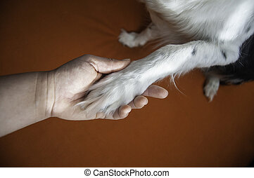 Woman and Black and White Border Collie. Dog Giving a Paw.