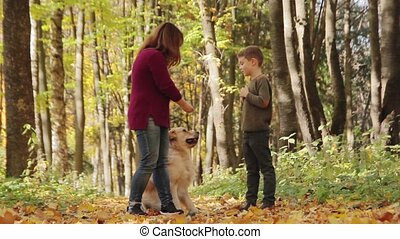 Woman and boy playing with golden retriever dog in the park....