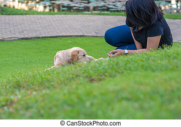 Woman and golden dog laying on green grass at outdoor
