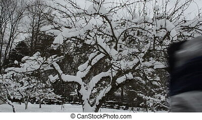 woman apple tree snow