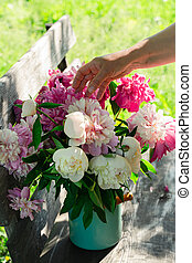 Woman arranging bouquet of peony flowers in milk can on wooden garden bench, closeup view
