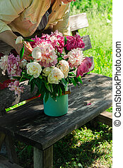 Woman arranging bouquet of peony flowers in milk can on wooden garden bench
