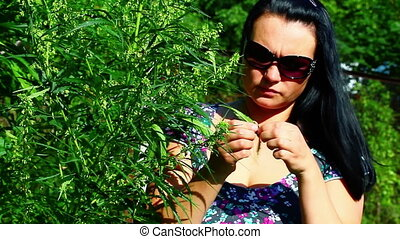 Woman at cannabis plant