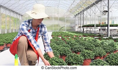 woman at work in greenhouse