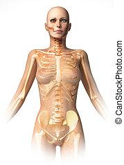 Woman body, with bone skeleton superimposed.